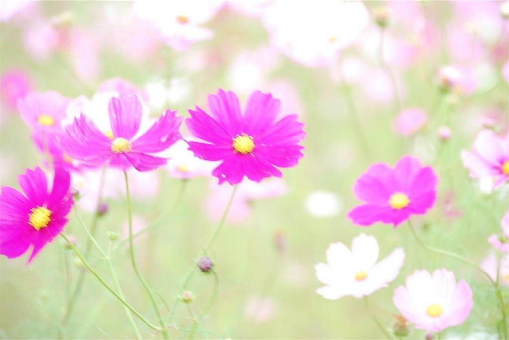 f:id:hyogonodaigakusei:20181014202751j:image