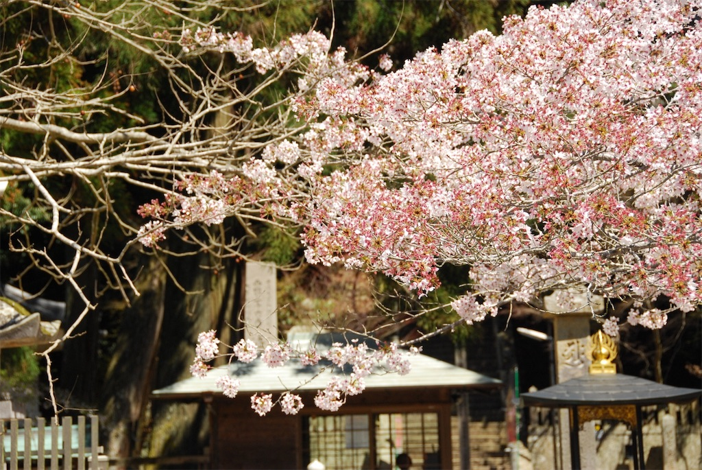 f:id:hyogonodaigakusei:20190414162540j:image