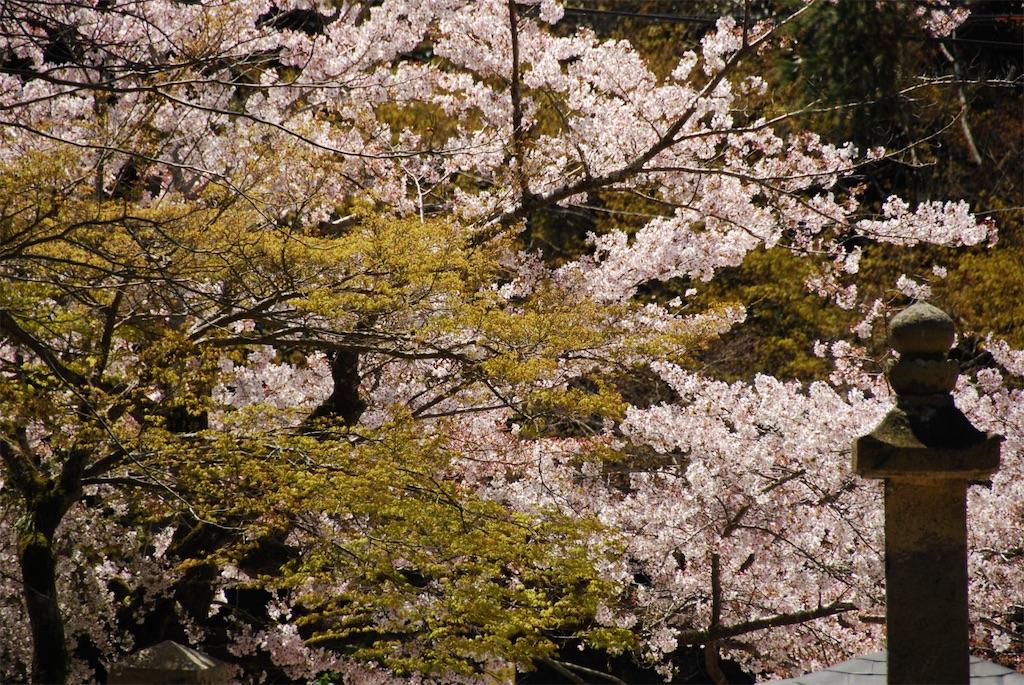 f:id:hyogonodaigakusei:20190414163109j:image