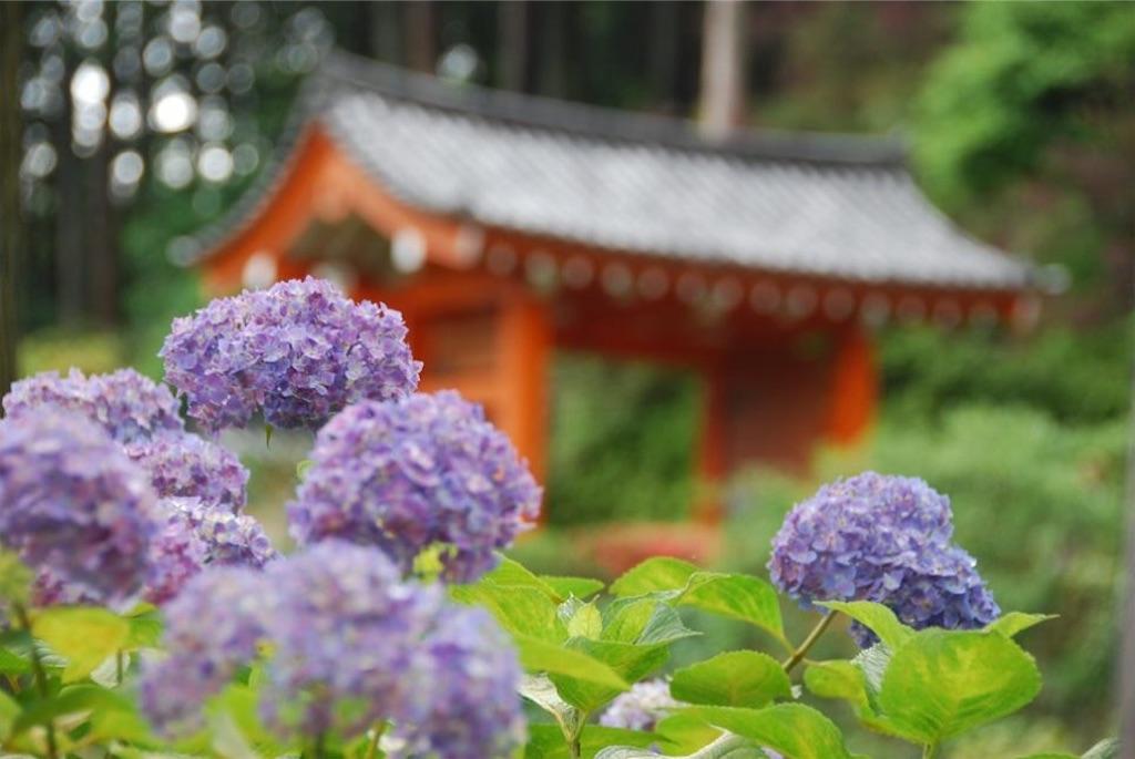 f:id:hyogonodaigakusei:20190611211157j:image