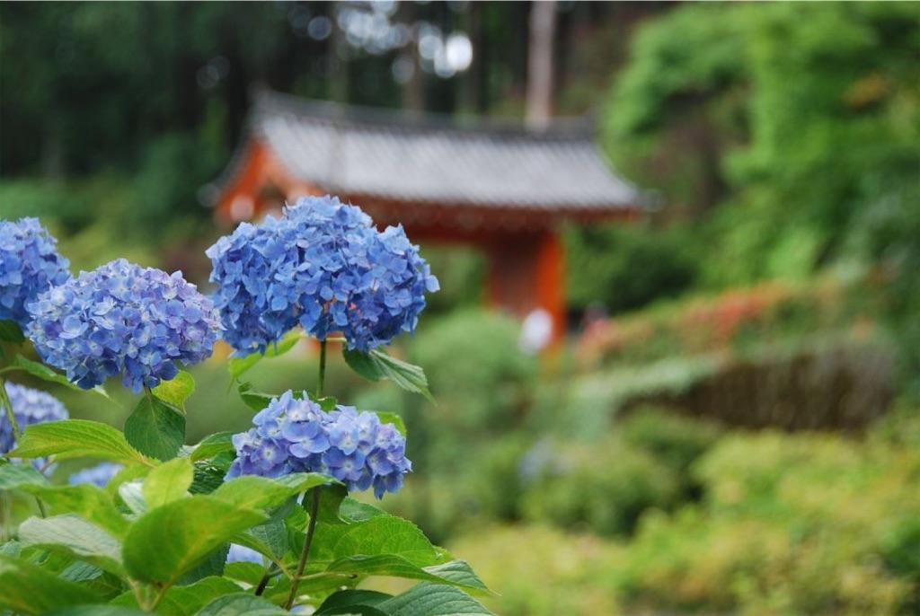 f:id:hyogonodaigakusei:20190611211210j:image