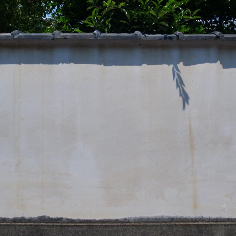 東福寺界隈 目立ちたがりの影