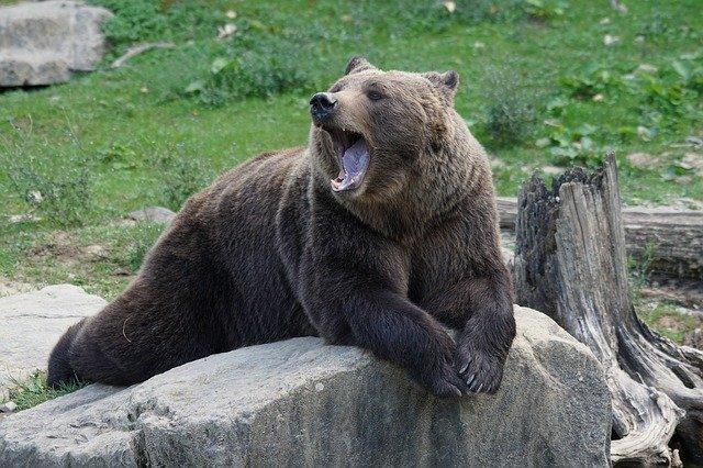 『ベア』とは、『熊が前足を振り下ろすイメージ』