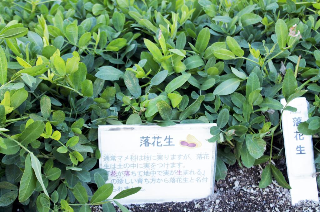 f:id:hyougonohanashi:20190218021219j:plain