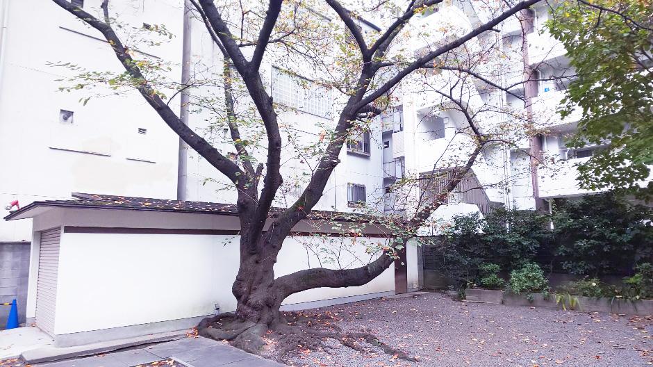 f:id:hyougonohanashi:20190226225013j:plain