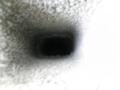 20110522092141