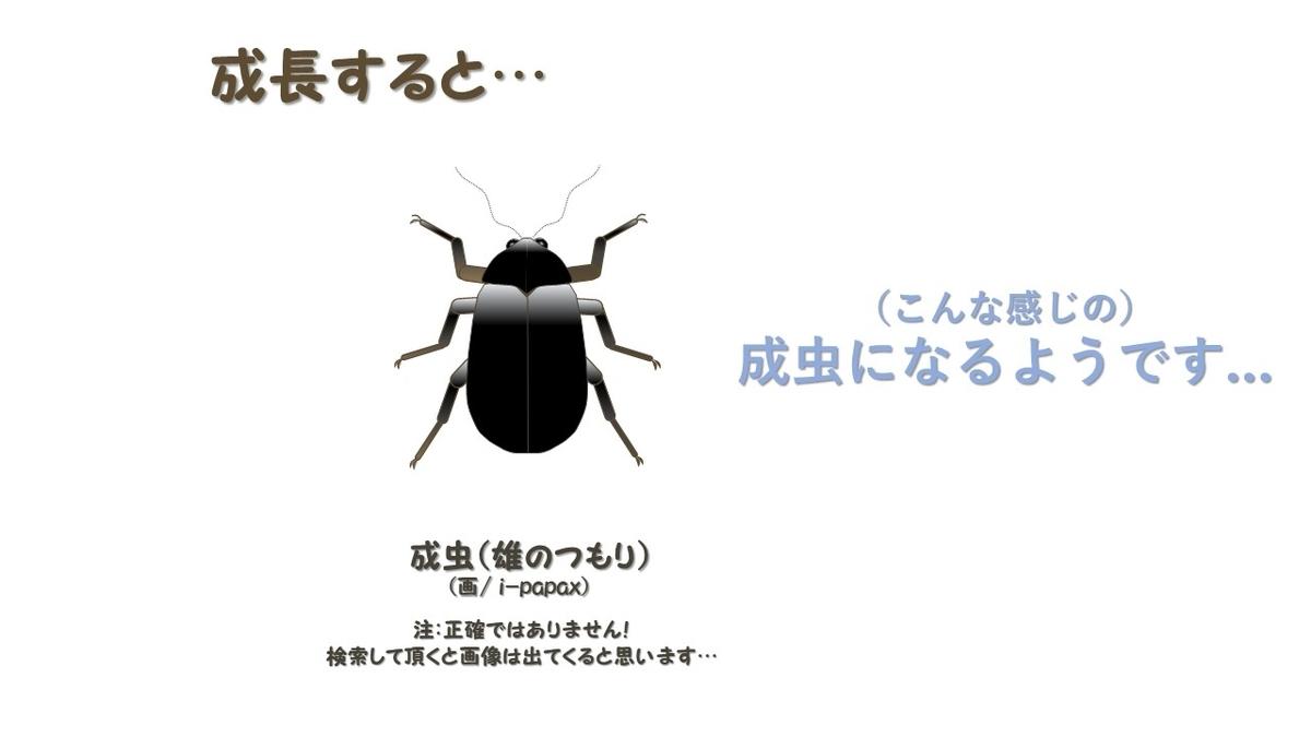 f:id:i-papax:20210403223407j:plain