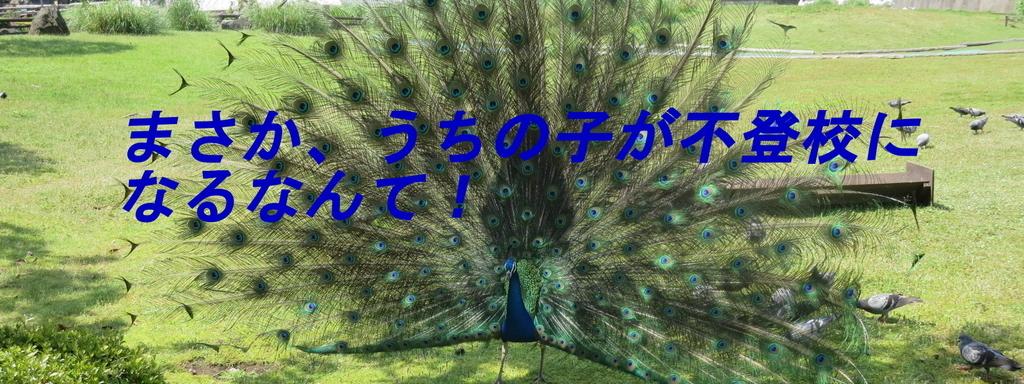 f:id:i-shiika:20181125204229j:plain