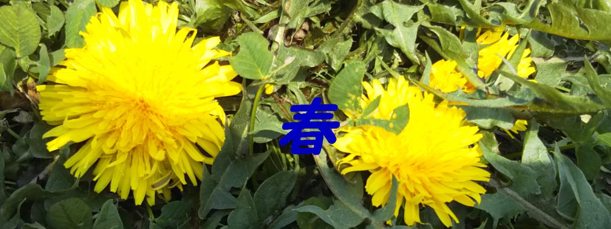 f:id:i-shiika:20190402180540j:plain
