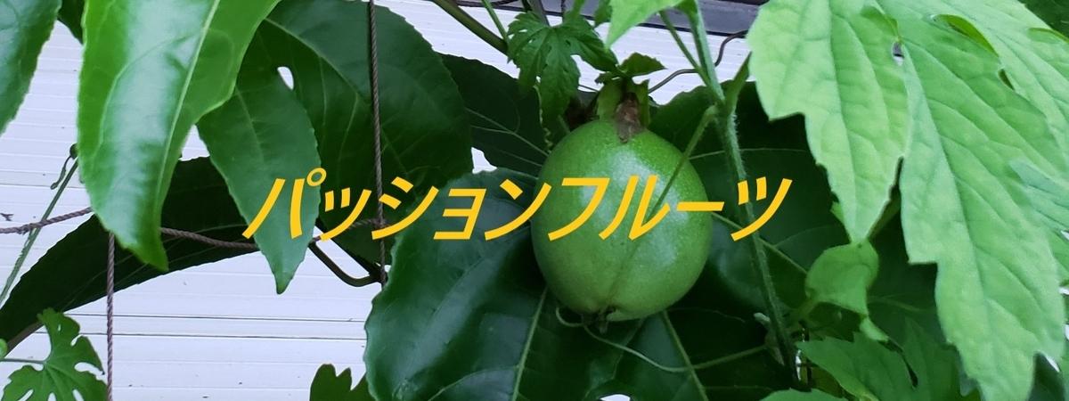 f:id:i-shiika:20190831164643j:plain