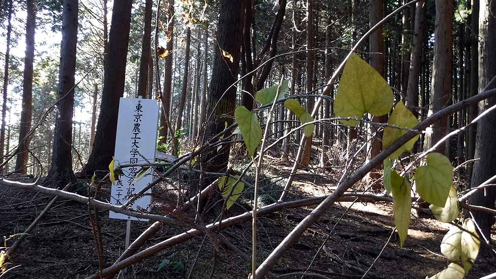 f:id:i-shizukichi:20161218191323j:plain