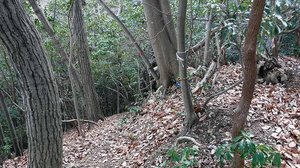 f:id:i-shizukichi:20170113191314j:plain