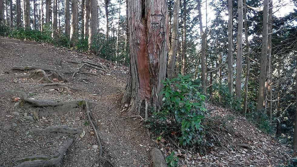 f:id:i-shizukichi:20170113191449j:plain