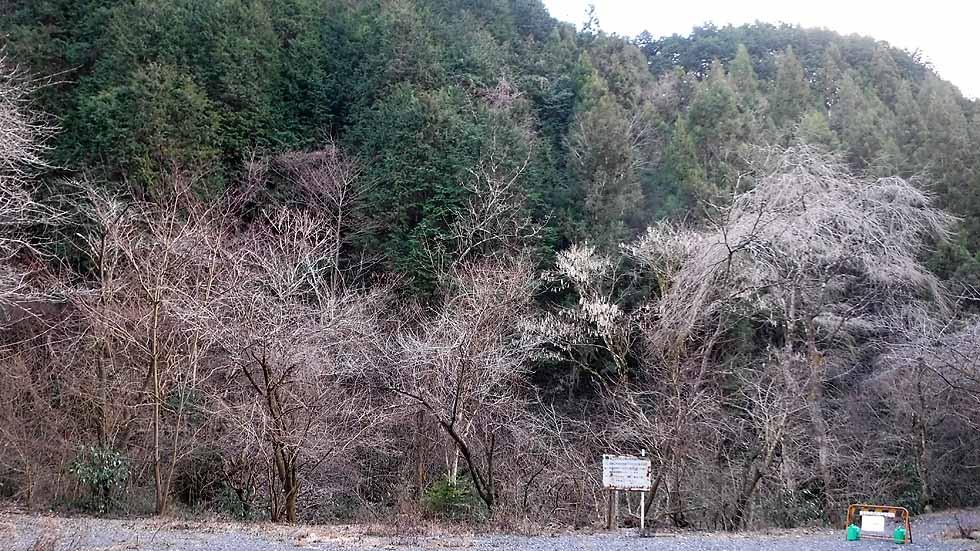 f:id:i-shizukichi:20170115203917j:plain