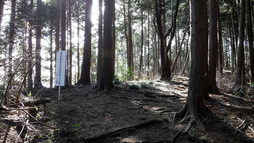f:id:i-shizukichi:20170121213441j:plain
