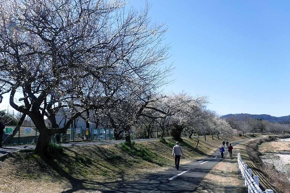 f:id:i-shizukichi:20170215211951j:plain