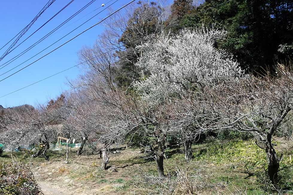 f:id:i-shizukichi:20170215212154j:plain