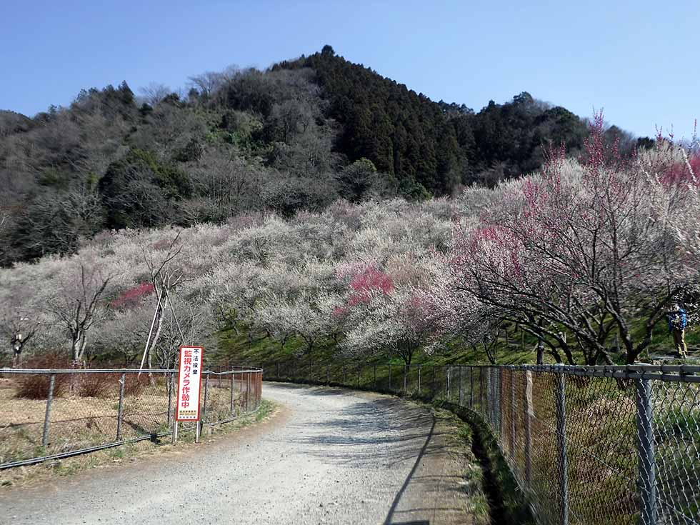 f:id:i-shizukichi:20170319001651j:plain