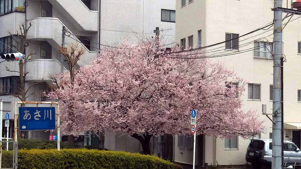 f:id:i-shizukichi:20170401193037j:plain