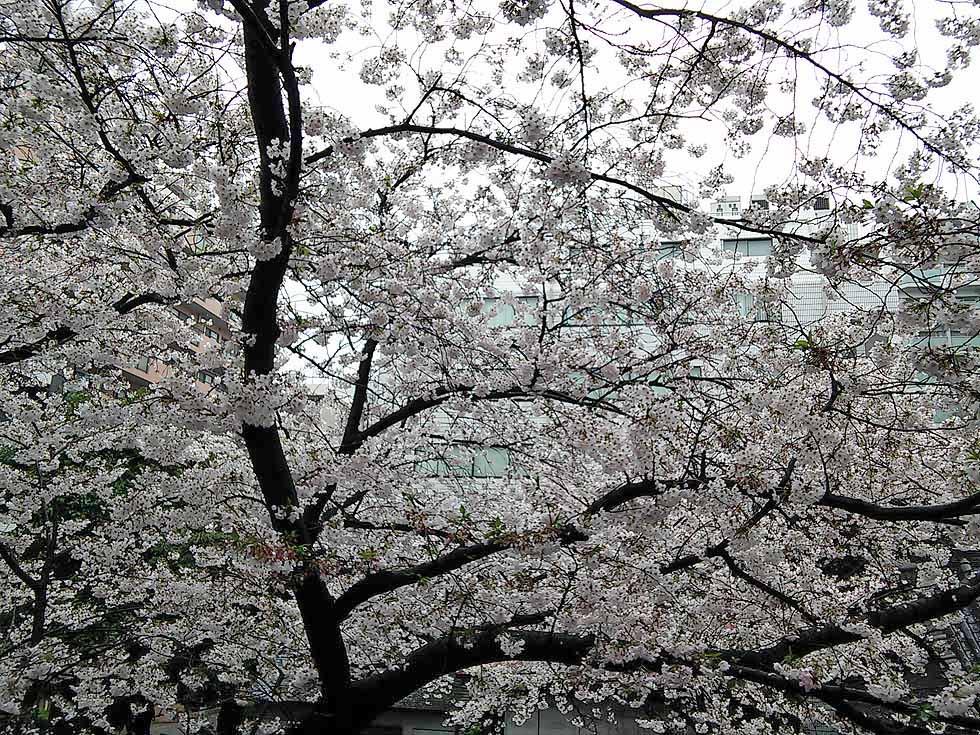 f:id:i-shizukichi:20170410235920j:plain