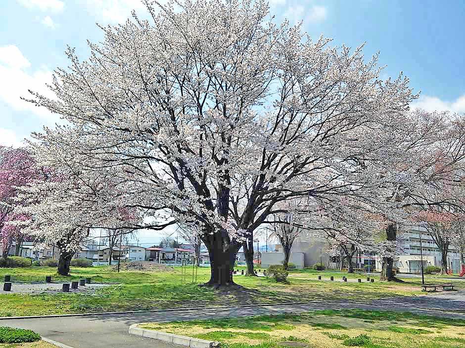 f:id:i-shizukichi:20170413152735j:plain