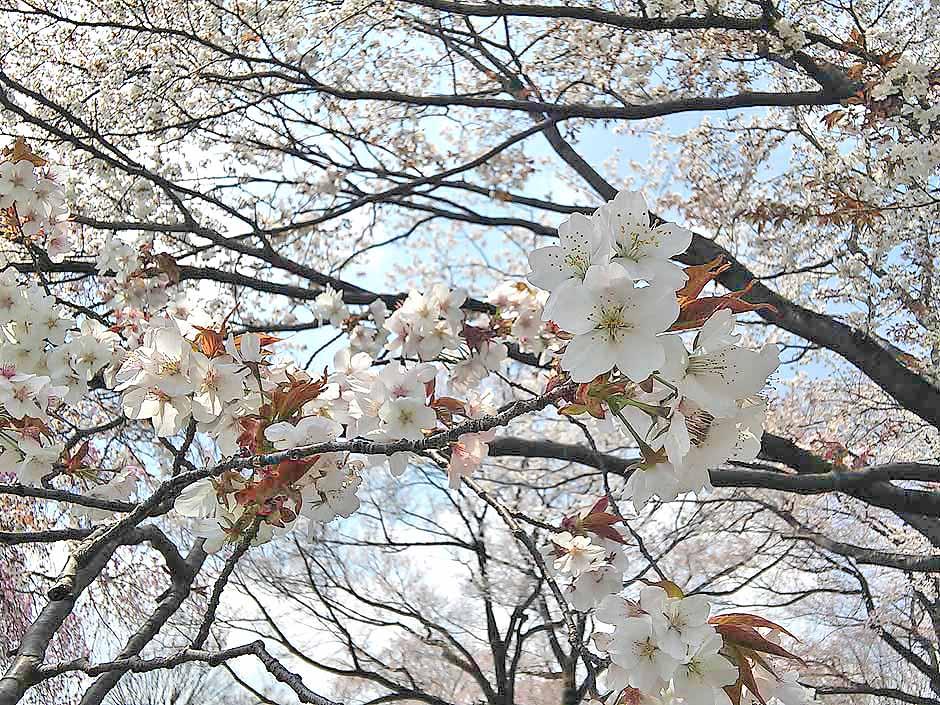 f:id:i-shizukichi:20170413152741j:plain