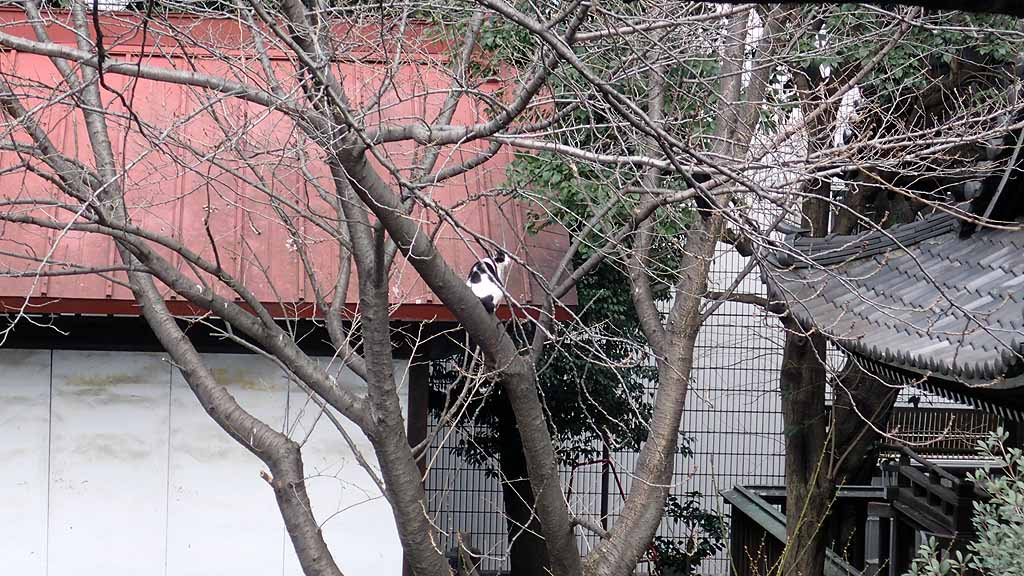 f:id:i-shizukichi:20180212111654j:plain
