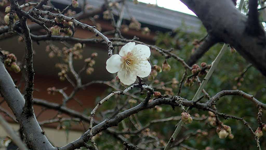 f:id:i-shizukichi:20180221101158j:plain