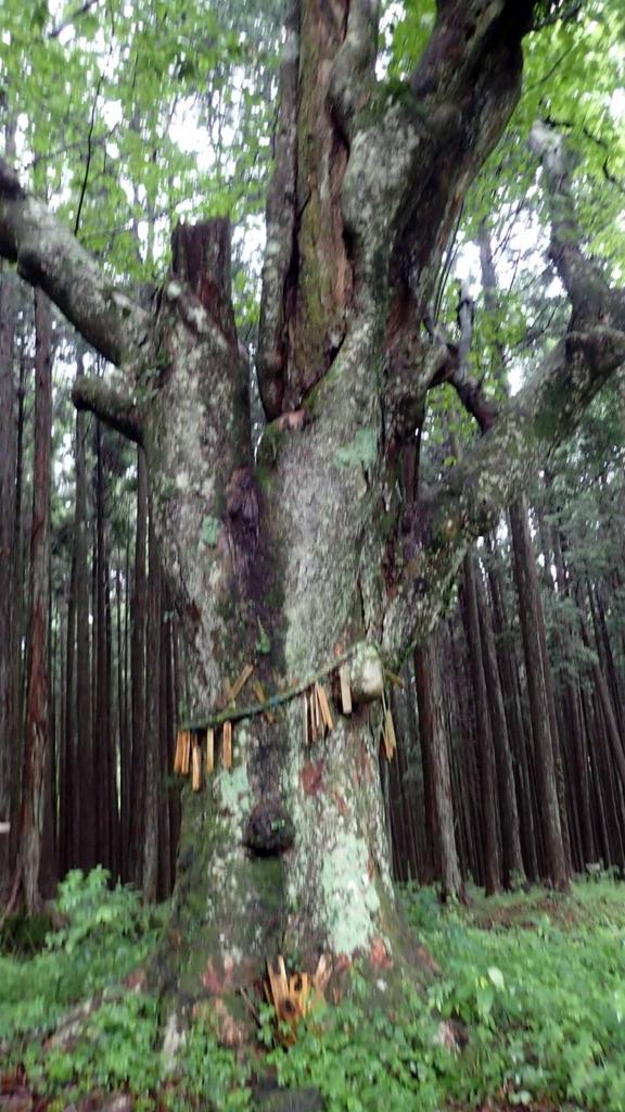 f:id:i-shizukichi:20180621191141j:plain