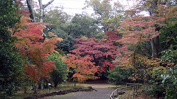 f:id:i-shizukichi:20181123114815j:plain