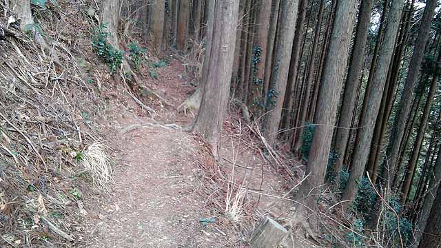f:id:i-shizukichi:20190315222523j:plain