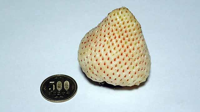 白いイチゴ「白い宝石」