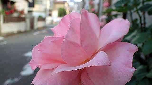 f:id:i-shizukichi:20190517162146j:plain
