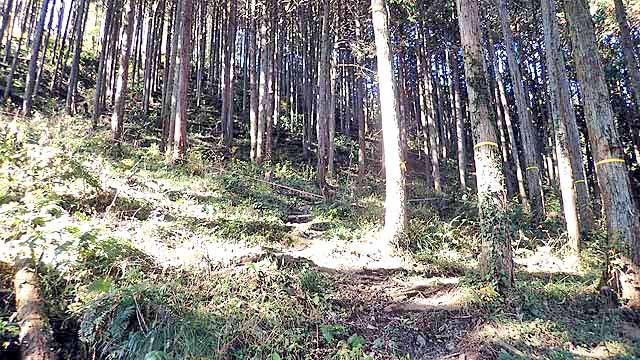 f:id:i-shizukichi:20191213000153j:plain