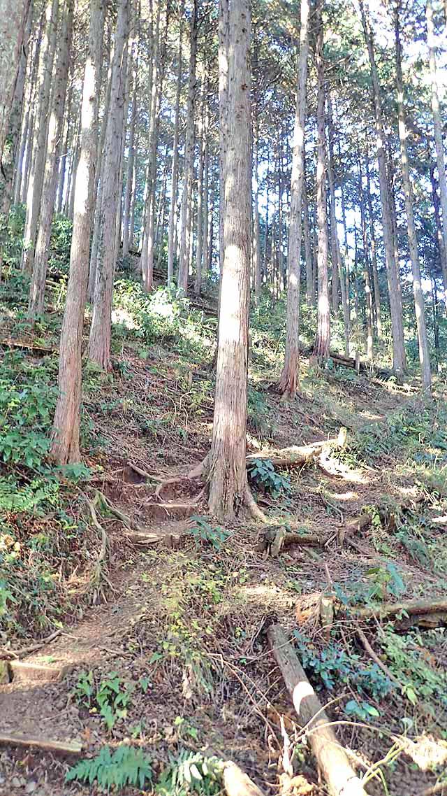 f:id:i-shizukichi:20191213000207j:plain