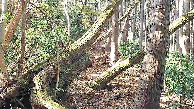 f:id:i-shizukichi:20191213000336j:plain