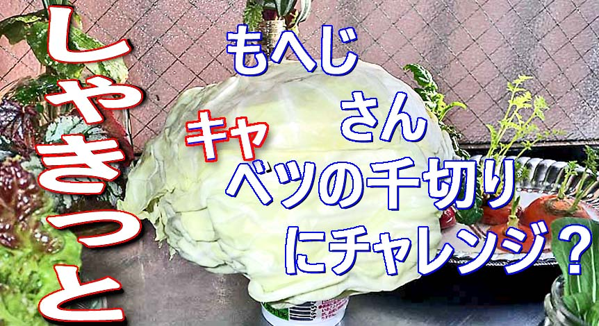 f:id:i-shizukichi:20200130165101j:plain