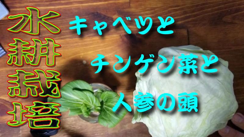 f:id:i-shizukichi:20200130165212j:plain