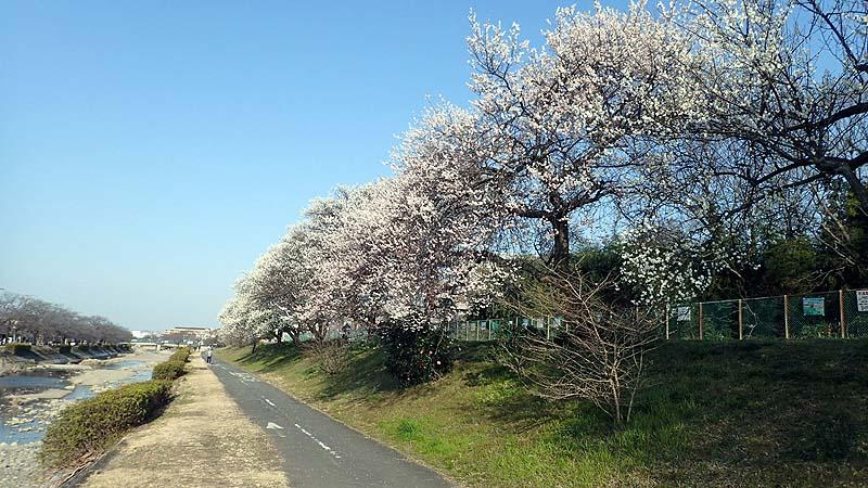 f:id:i-shizukichi:20200224181232j:plain
