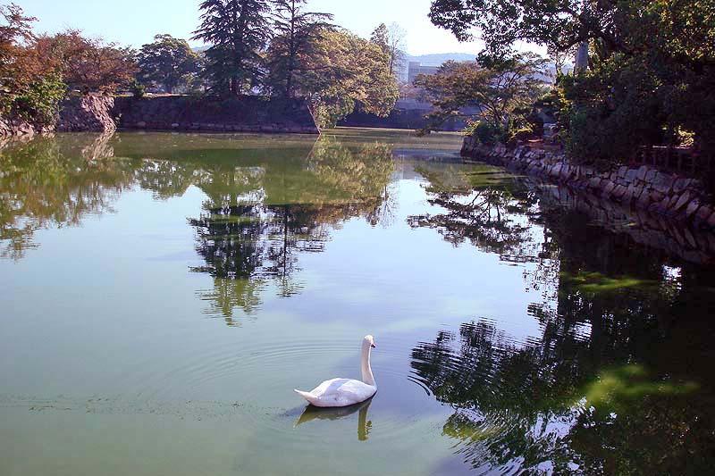 f:id:i-shizukichi:20200722193405j:plain