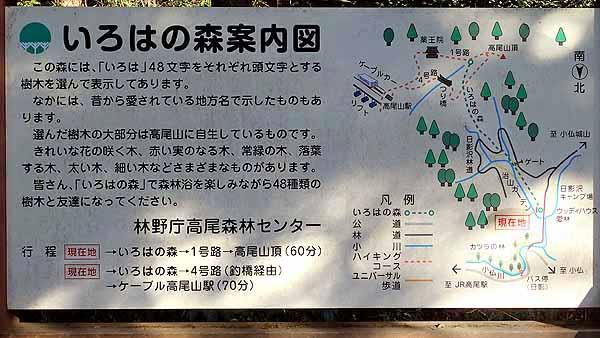 f:id:i-shizukichi:20201123135802j:plain