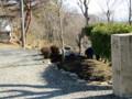 駐車場へ入る手前は移植8年の桜「そめいよしの」を中心の花壇です