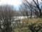 犀川白鳥湖は西陽でキラキラ‥鳴き声は静かに