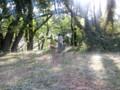 木漏れ日が映える、ボンだけのドッグラン広場