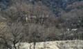木々の間に我家‥土蔵のシロ壁が目標