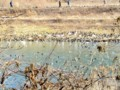 堤防の向こう側に犀川ダム湖が‥
