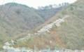 光城山の桜‥登山口標高600m