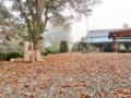 欅の落ち葉一色に‥駐車場広場