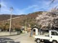 光城山の桜‥集会所から望む