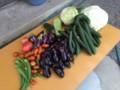 収穫の野菜‥